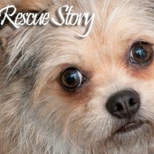Gidget-RescueStoryHD