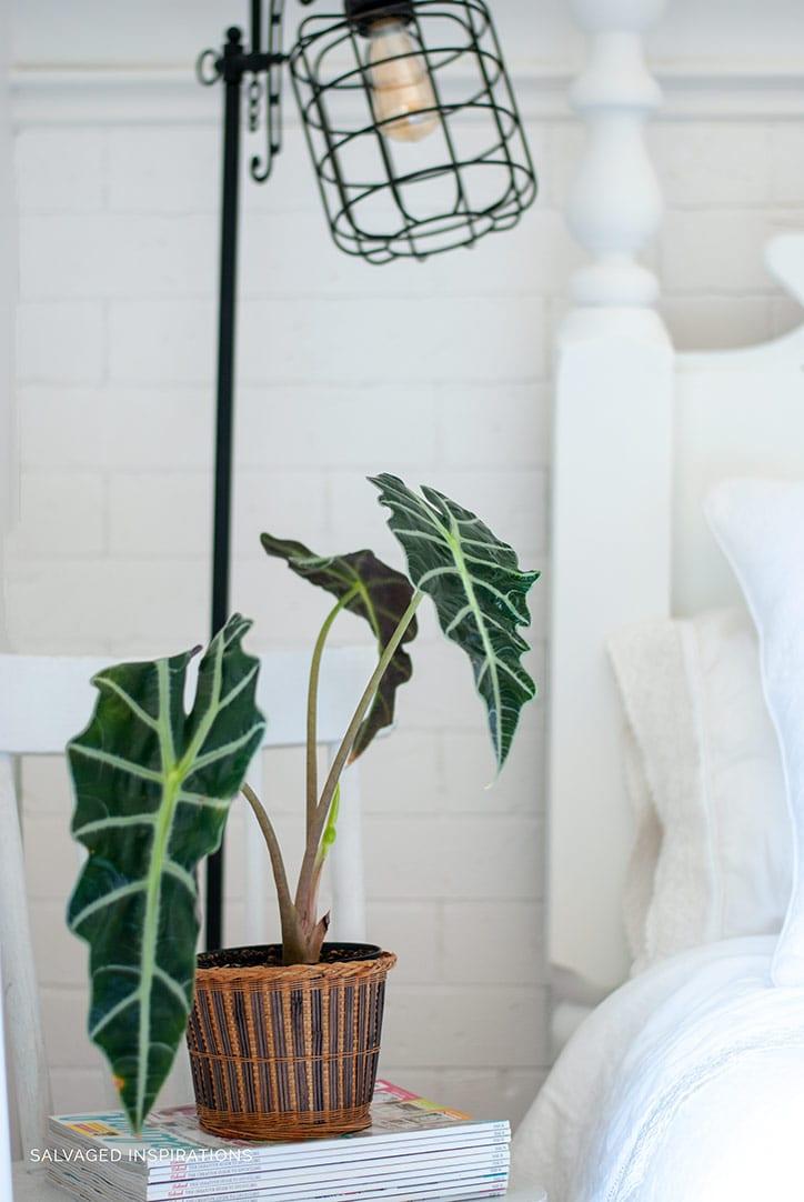 Bedside Plant