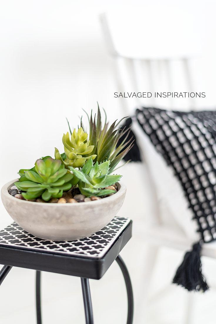 Close Up of Succulent Plantstand
