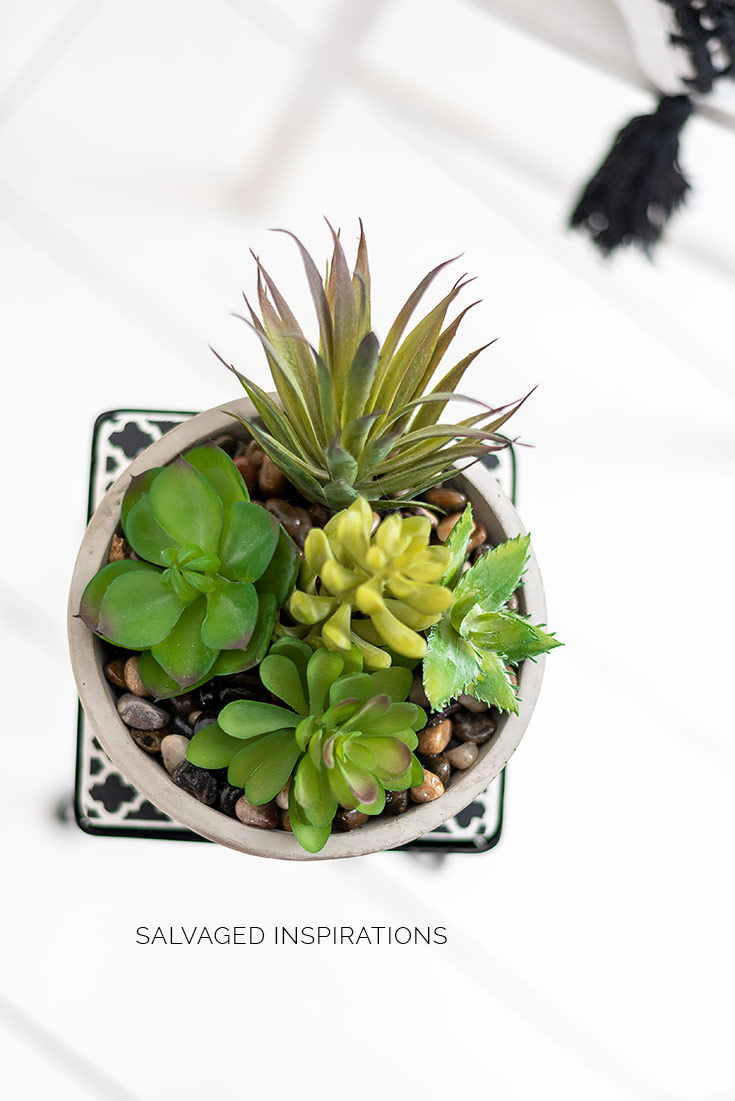 Top View of Succulent on Small Plant Stand